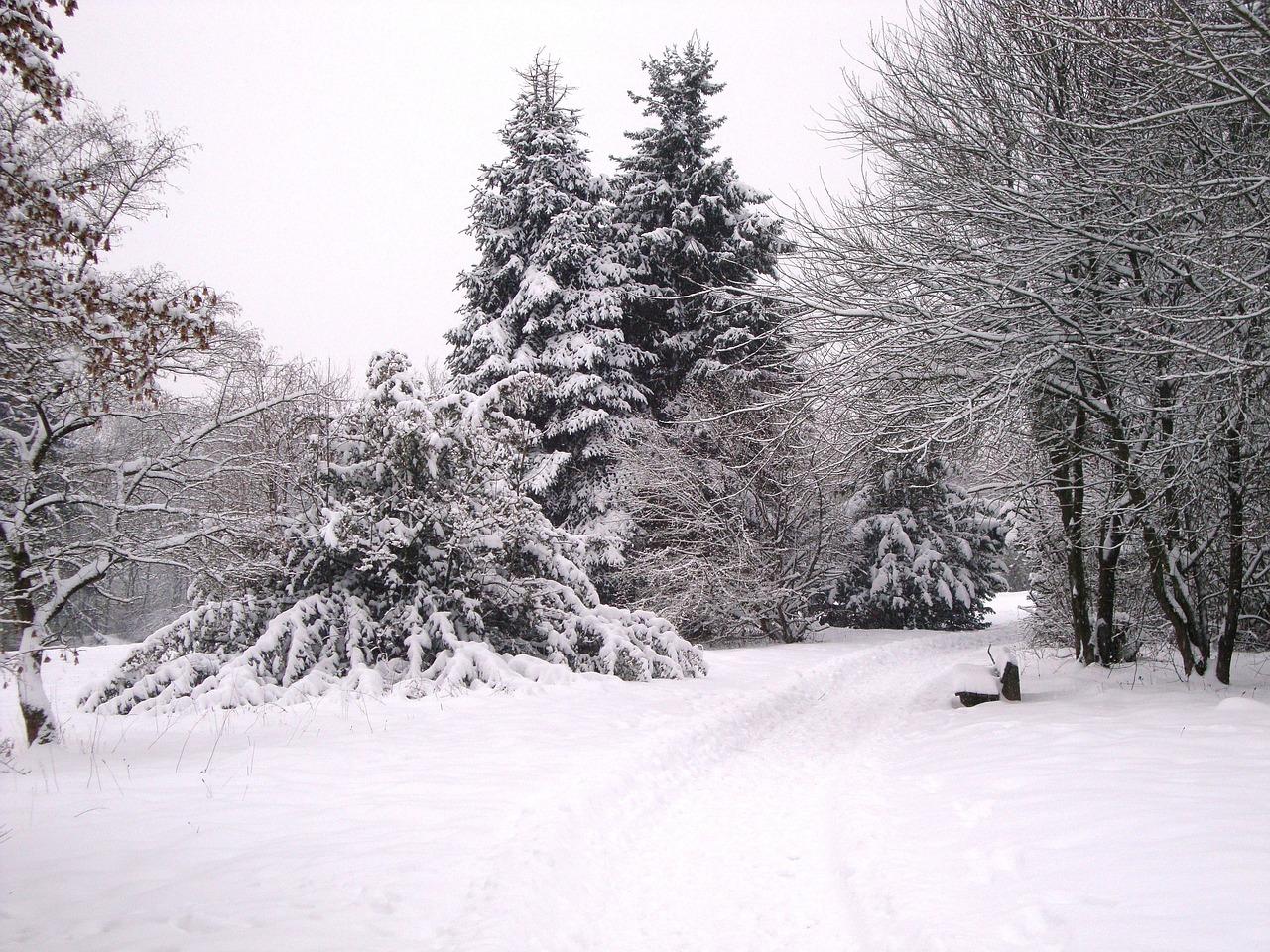 картинка зима метельная это можно компании