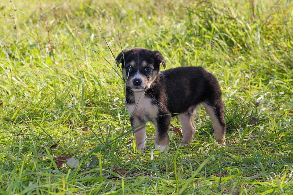 Cão, Filhotes De Cachorro, Cachorro, Baby Animal