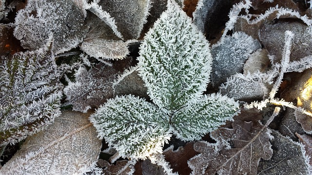 Frost Raureif Rauhreif · Kostenloses Foto Auf Pixabay