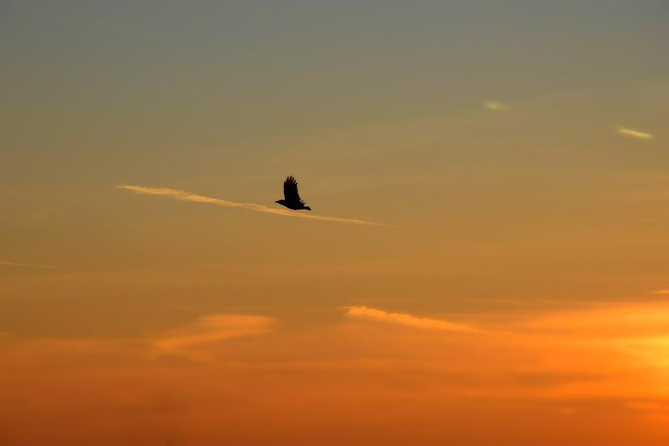 Download 6100 Koleksi Background Alam Burung Gratis Terbaru