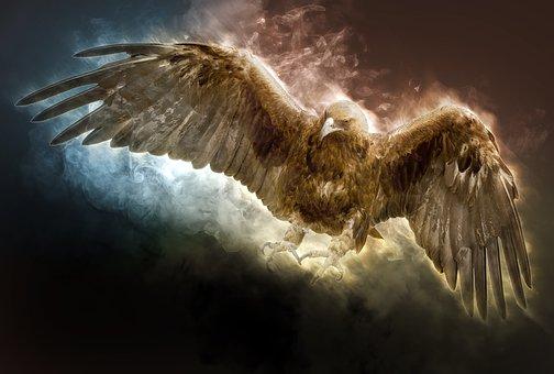 Aigle D'Or, Eagle, Oiseau, Prédateur
