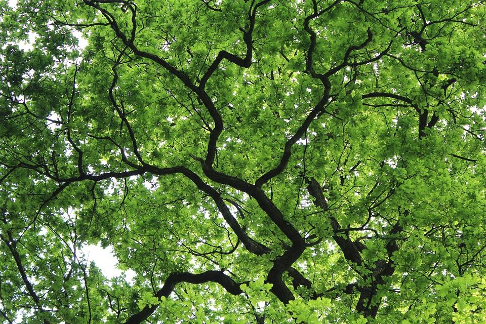 nature spring green tree - photo #2