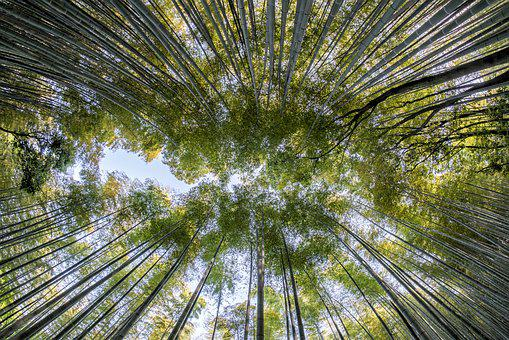 Bamboo Forest Images Pixabay Download Free Pictures