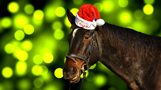 free photo  horse  christmas  santa hat  funny - free image on pixabay