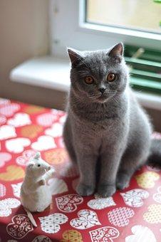 猫, ブリティッシュショートヘアの猫, ペット, ネコ科の動物, こはく色の目