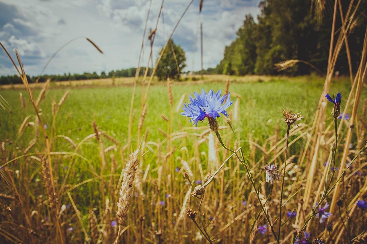 палитра цветов по фото