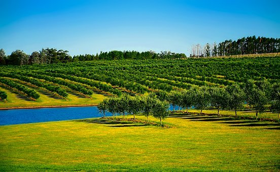 Uruguay, Orchard, Trees, Canal, Water