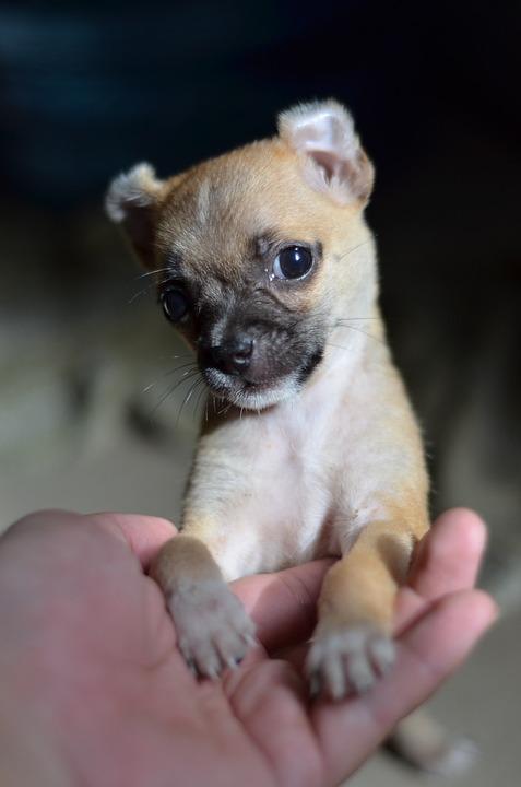 Small Dogs At Mas