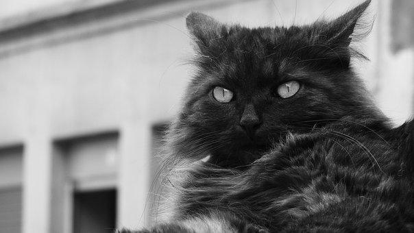 Veľká čierna mačička dostane fucked