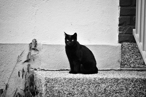 Ingyenes szőrös fekete punci képek