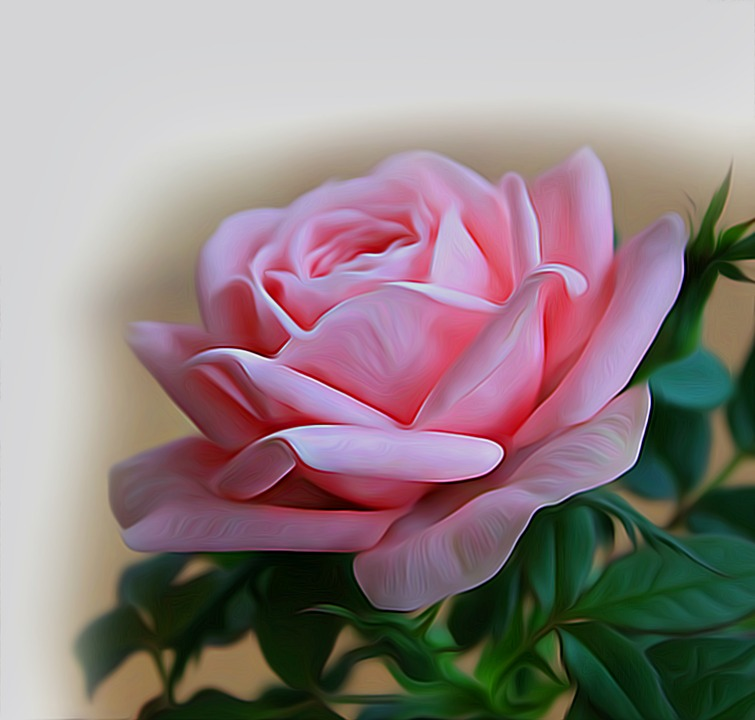 Rose pink flowers free image on pixabay rose pink flowers pink saturday flower red mightylinksfo