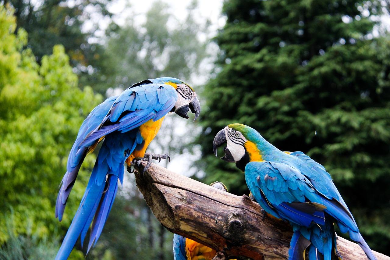 Картинки с попугайчиками