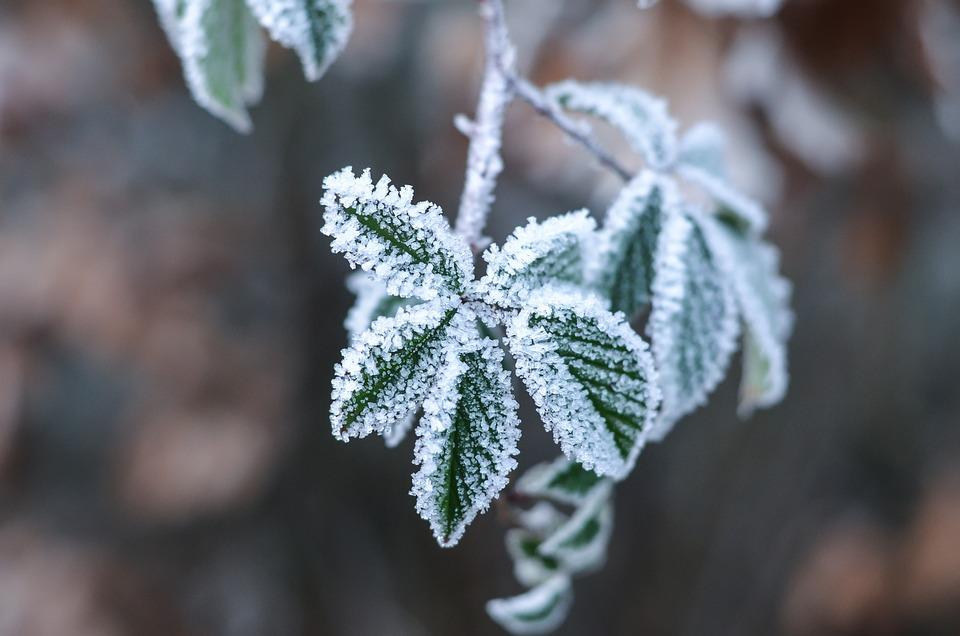 photo gratuite: fleurs de glace, hivernal, feuille - image