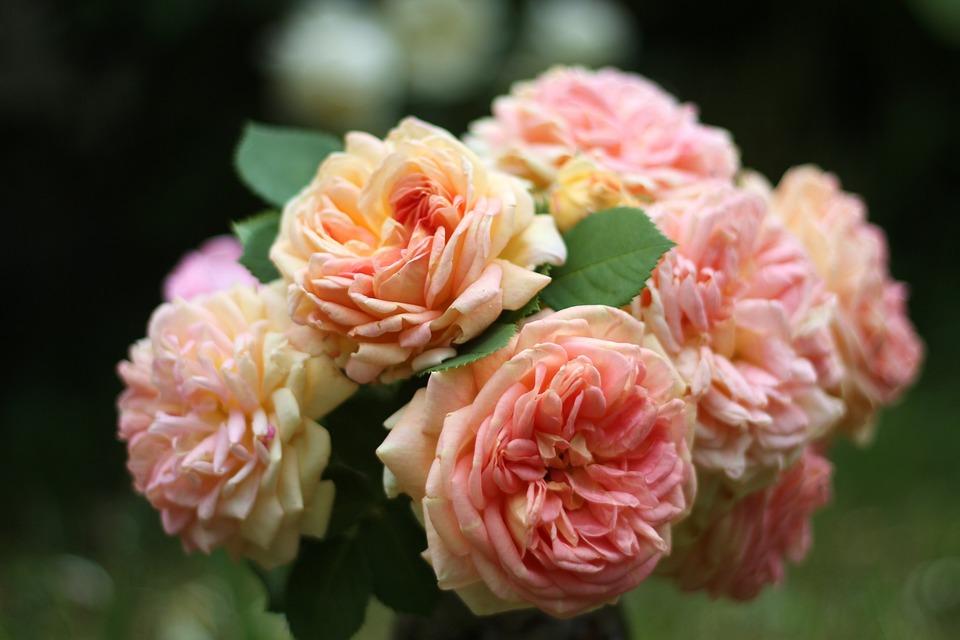 Bouquet D Anniversaire Roses Photo Gratuite Sur Pixabay