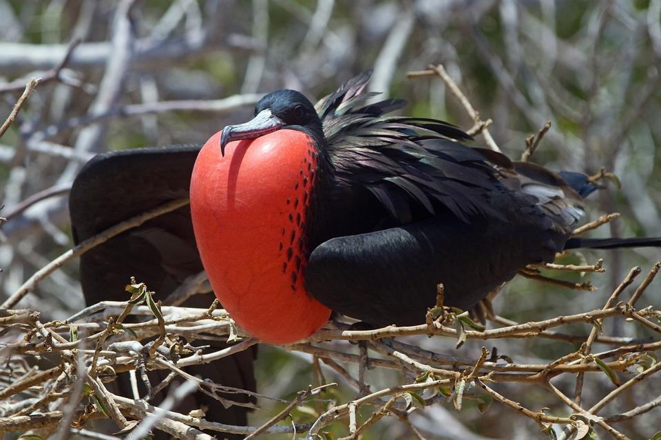 Prsia a veľké vtáky