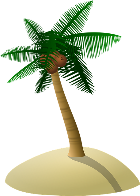 Coconut Tree Palm Dune 183 Free Vector Graphic On Pixabay