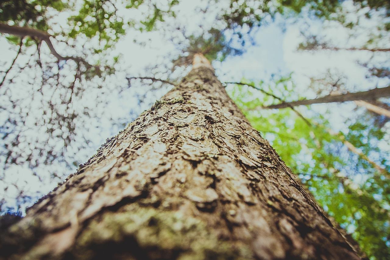 Картинки стволов дерева