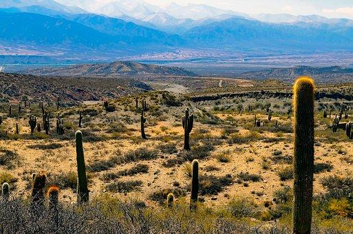 Argentina, Landscape, Cactus, Cacti