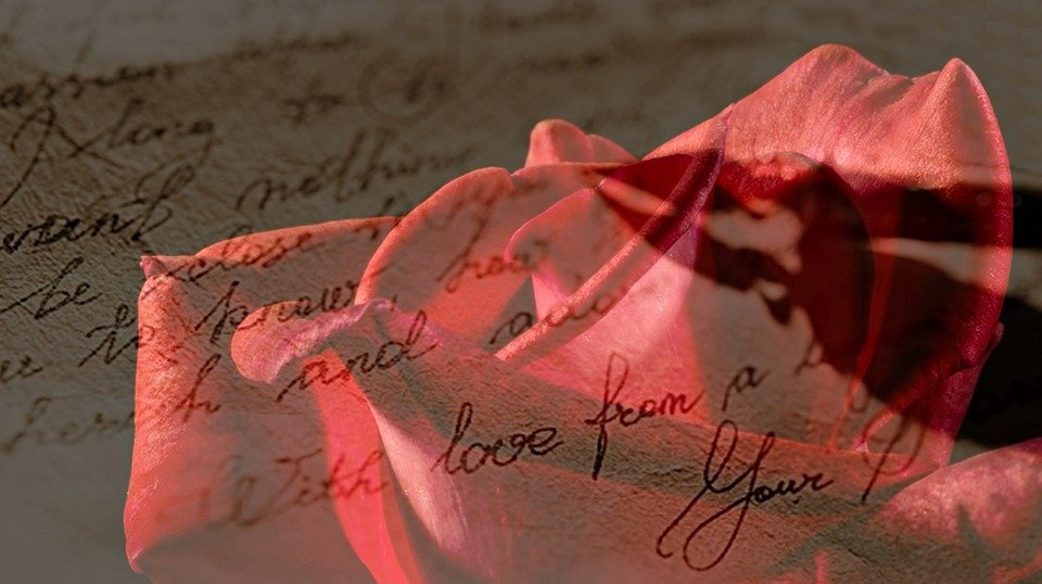 rose red red rose love letter handwritten feather