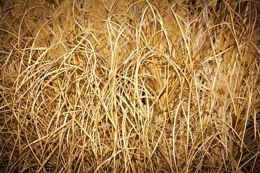 Grass, Natural, Garden, Floral, Dry