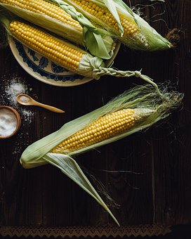 Corn Cobs The Ear Food Harvest Farm Vegeta