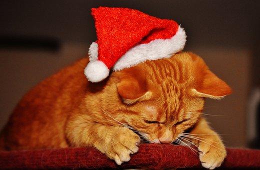 200 Free Christmas Cat Cat Images Pixabay