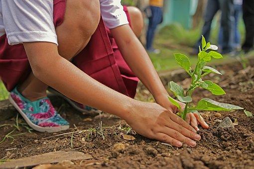 Planting, Environment, Nature, Botany