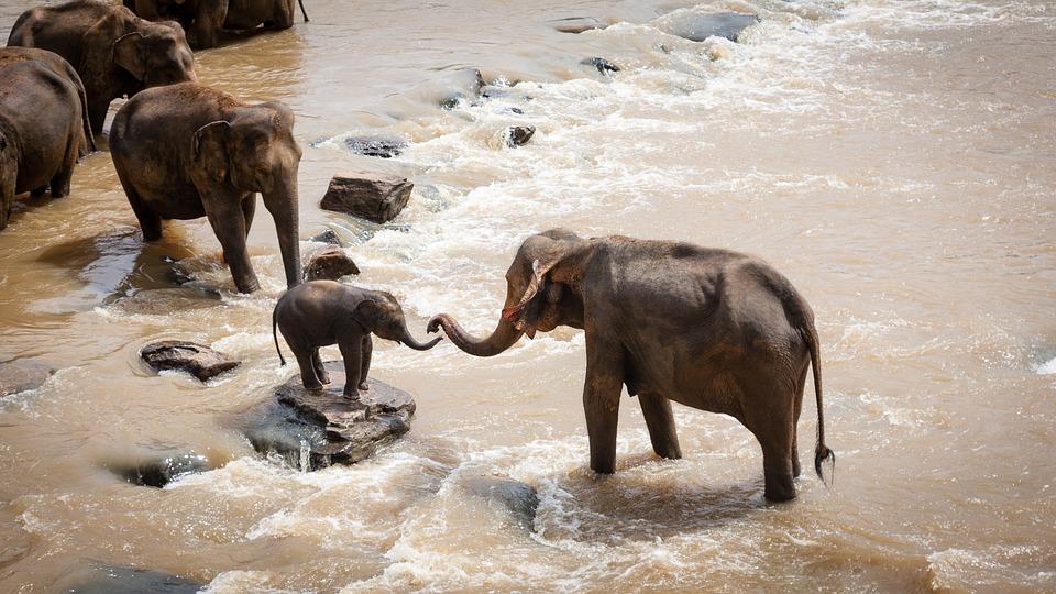 Les Éléphants, Groupe Familial, Rivière, La Faune