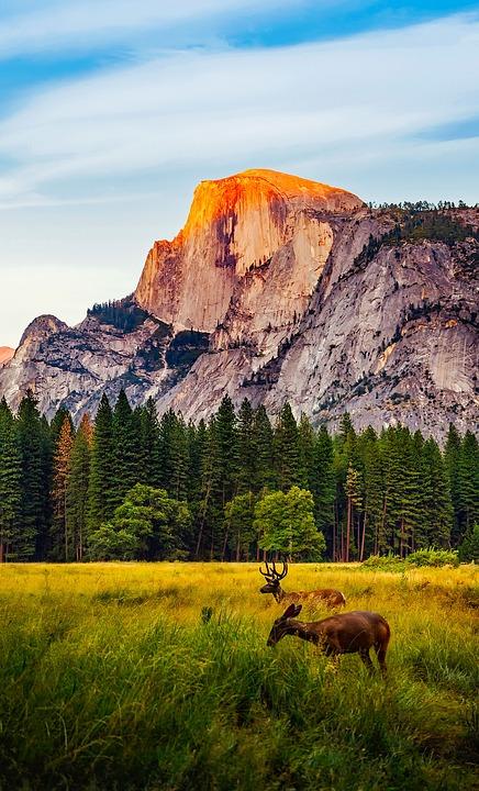 yosemite national park california  u00b7 free photo on pixabay