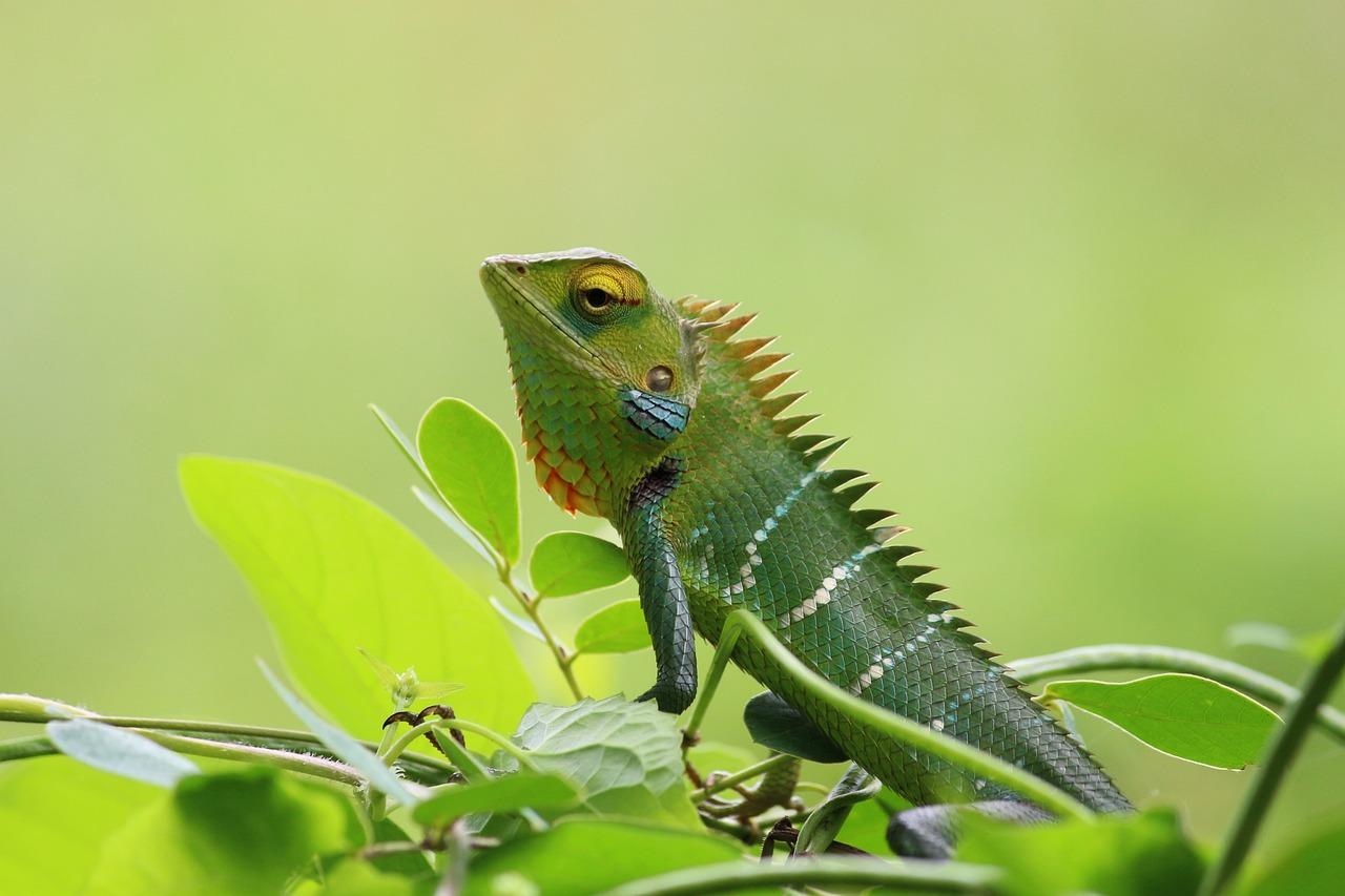 カメレオン 野生 自然 Pixabayの無料写真