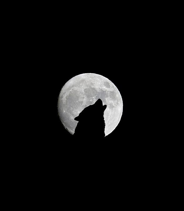 พระจันทร์เต็มดวง, ดวงจันทร์, มืด, หมาป่า, คืน, ความมืด