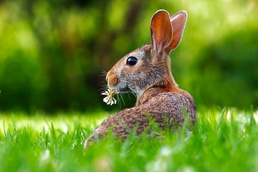 Rabbit Hare Animal Cute Adorable Lawn Gras