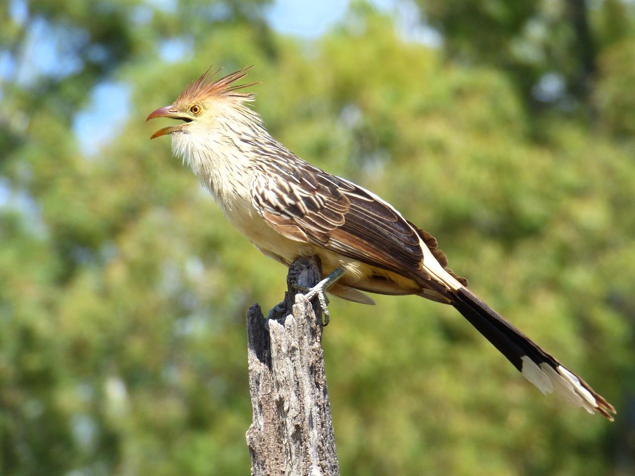 как любой самая первая птица фото рассказывают