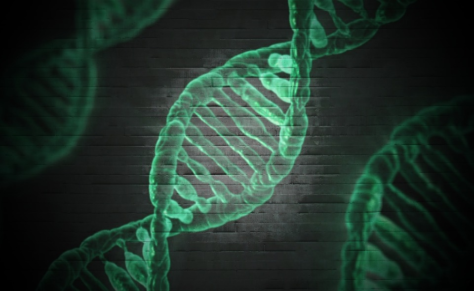 Dna, 顕微鏡, セル, 遺伝子, らせん, 科学, 医療, 生物学, 遺伝的, 医学, 分子, 染色体