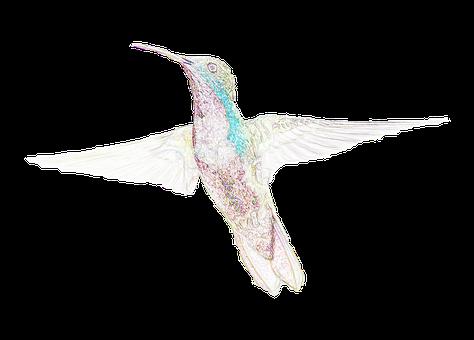 鳥, ハチドリ, テクスチャ, 文房具, ビンテージ, 地図