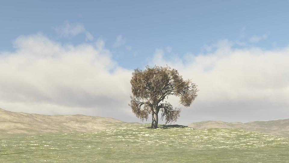 arbre paysage nature ciel bleu horizon nuages - Arbre Ciel