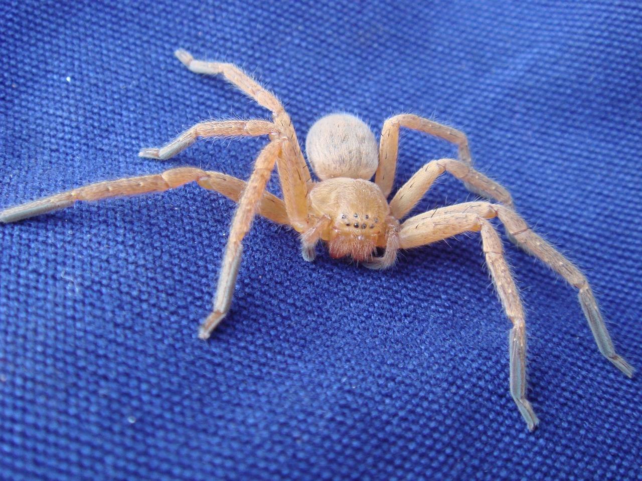 Кому снились пауки перед беременностью