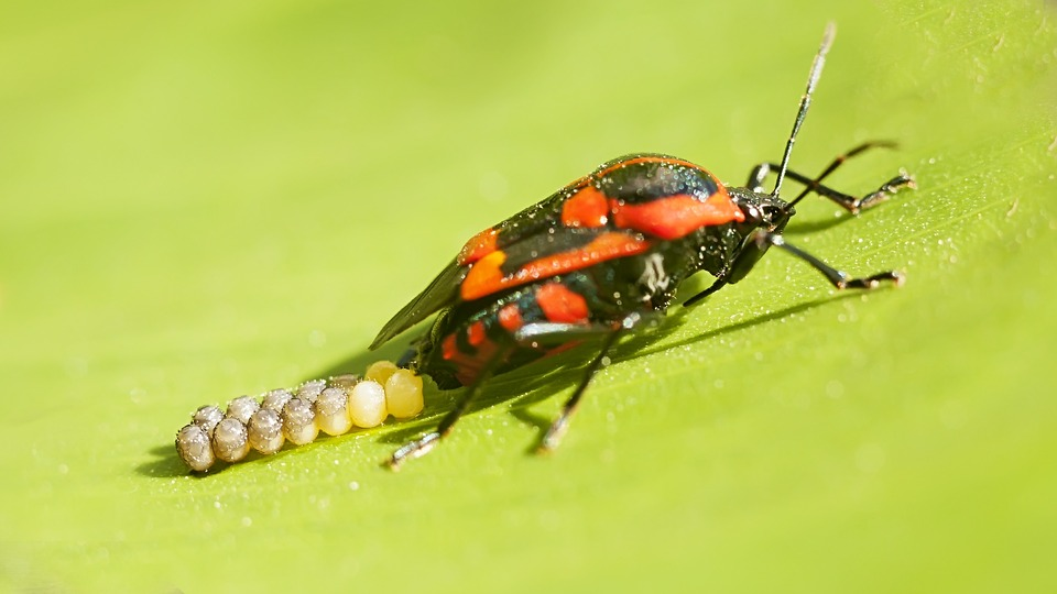 free photo bugs insects red bug nature red free image on