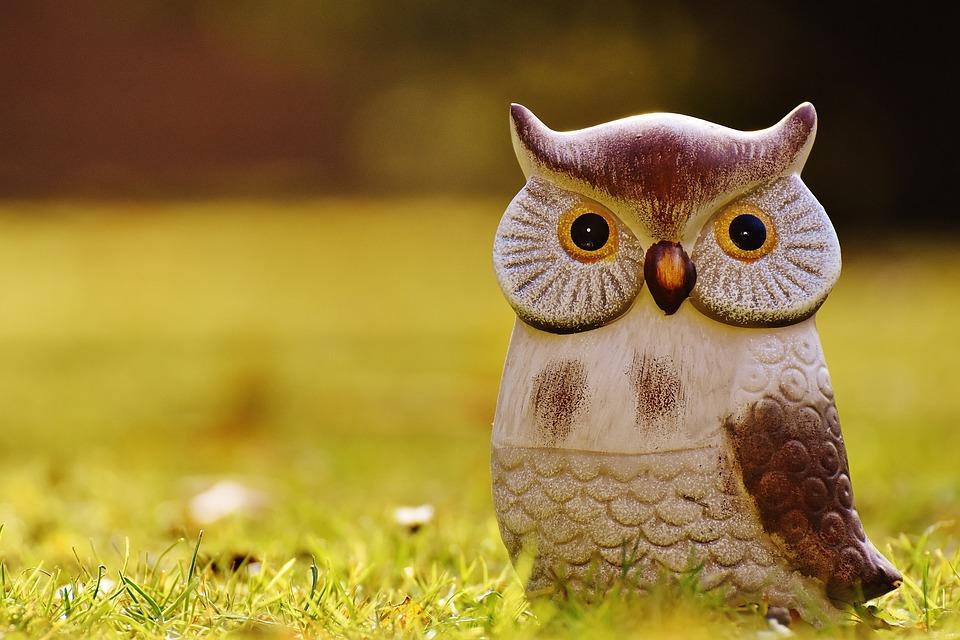 Unduh 76+ Foto Gambar Burung Hantu Lucu HD Terbaik Gratis