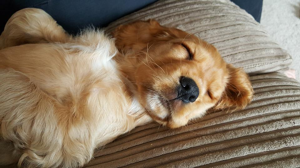 how to put my puppy to sleep