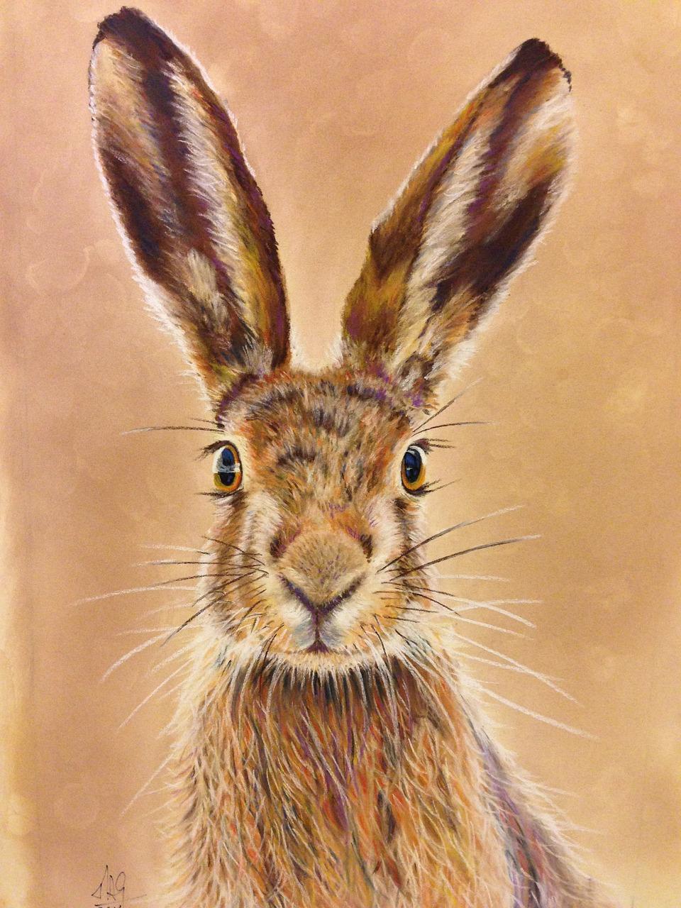 Картинки с изображениями зайцев