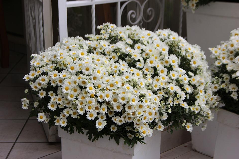 Blumen-Arrangement Weißen Blüten · Kostenloses Foto auf Pixabay