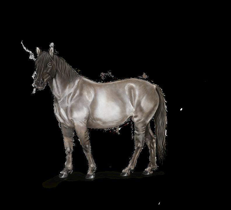 Kresba Obrazky Pixabay Stahuj Obrazky Zdarma
