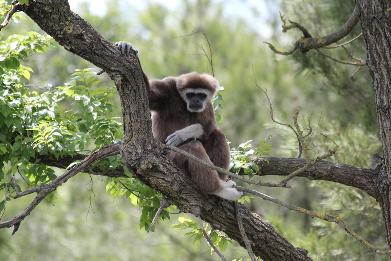 обезьянки в джунглях картинка мальчишка сбежал