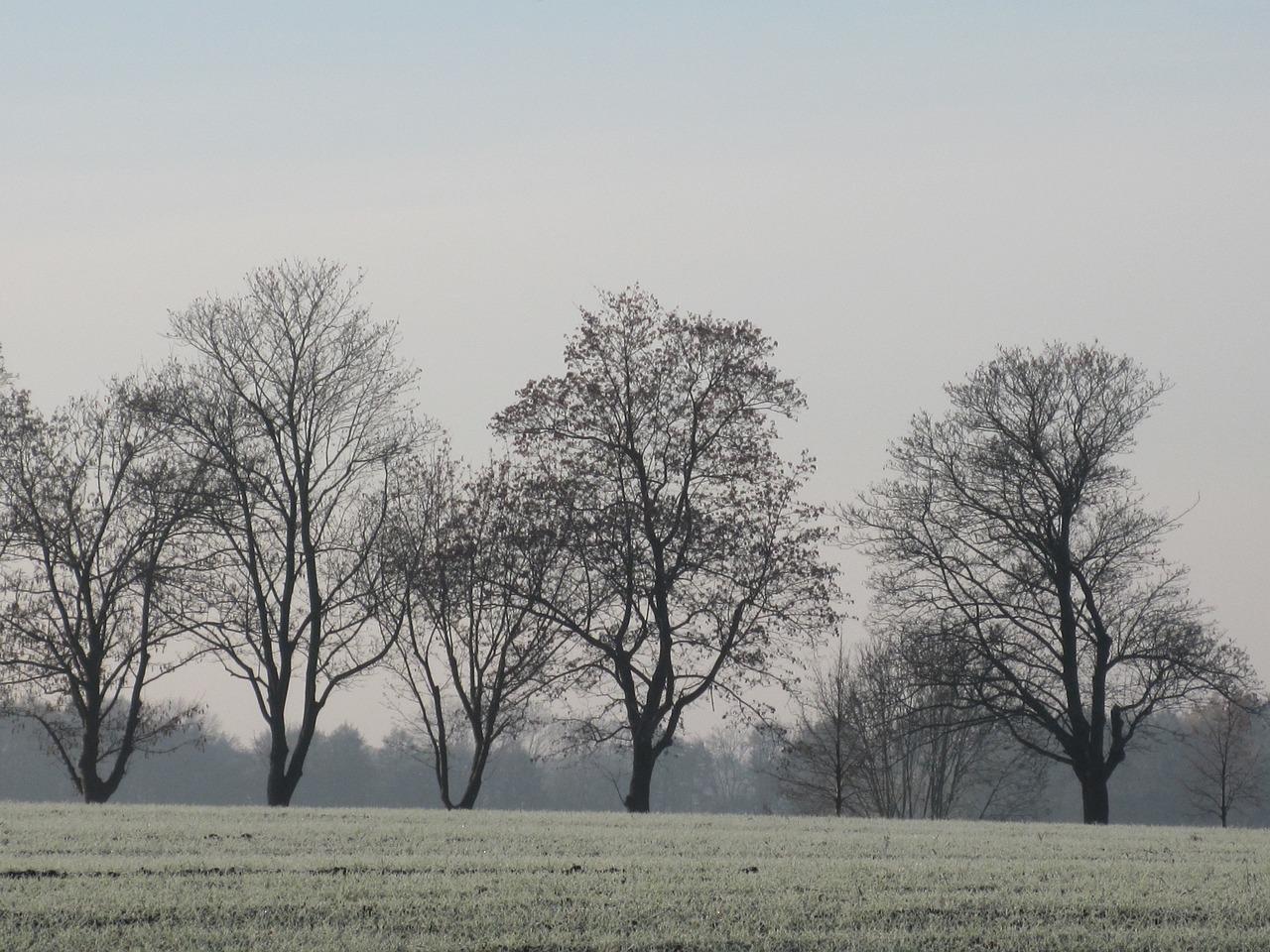 Лысое дерево картинка