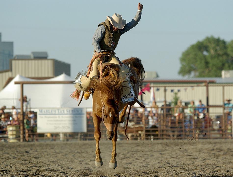 Rodeo A Cavallo.Cowboy Rodeo Cavallo Foto Gratis Su Pixabay
