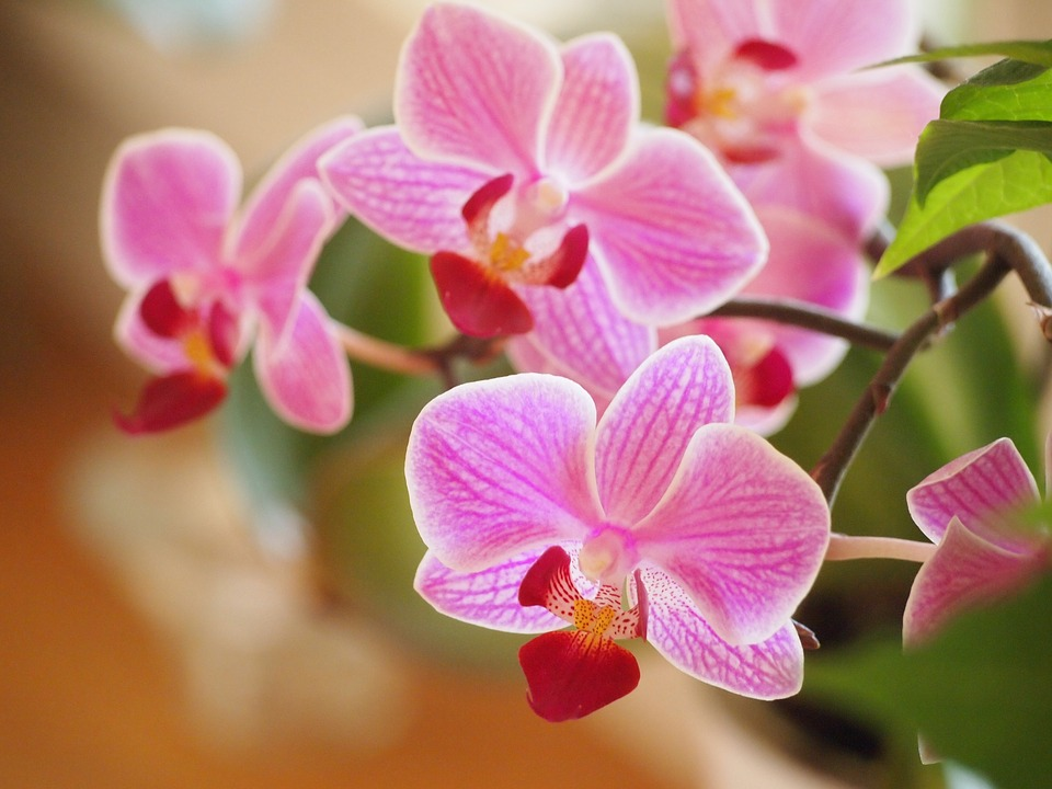 purple, orchid  free images on pixabay, Beautiful flower