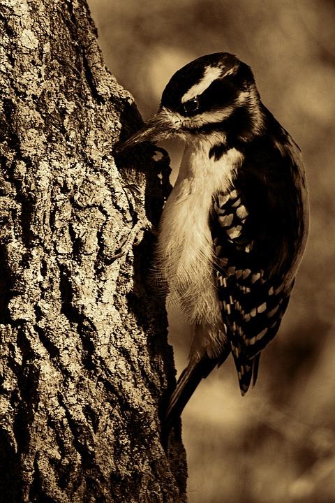 Εμφάνιση φωτογραφίες πουλί σας