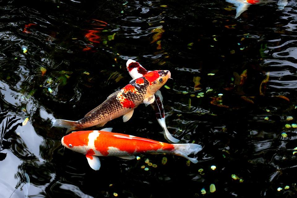 Animales-de-agua-dulce-rios-lagos