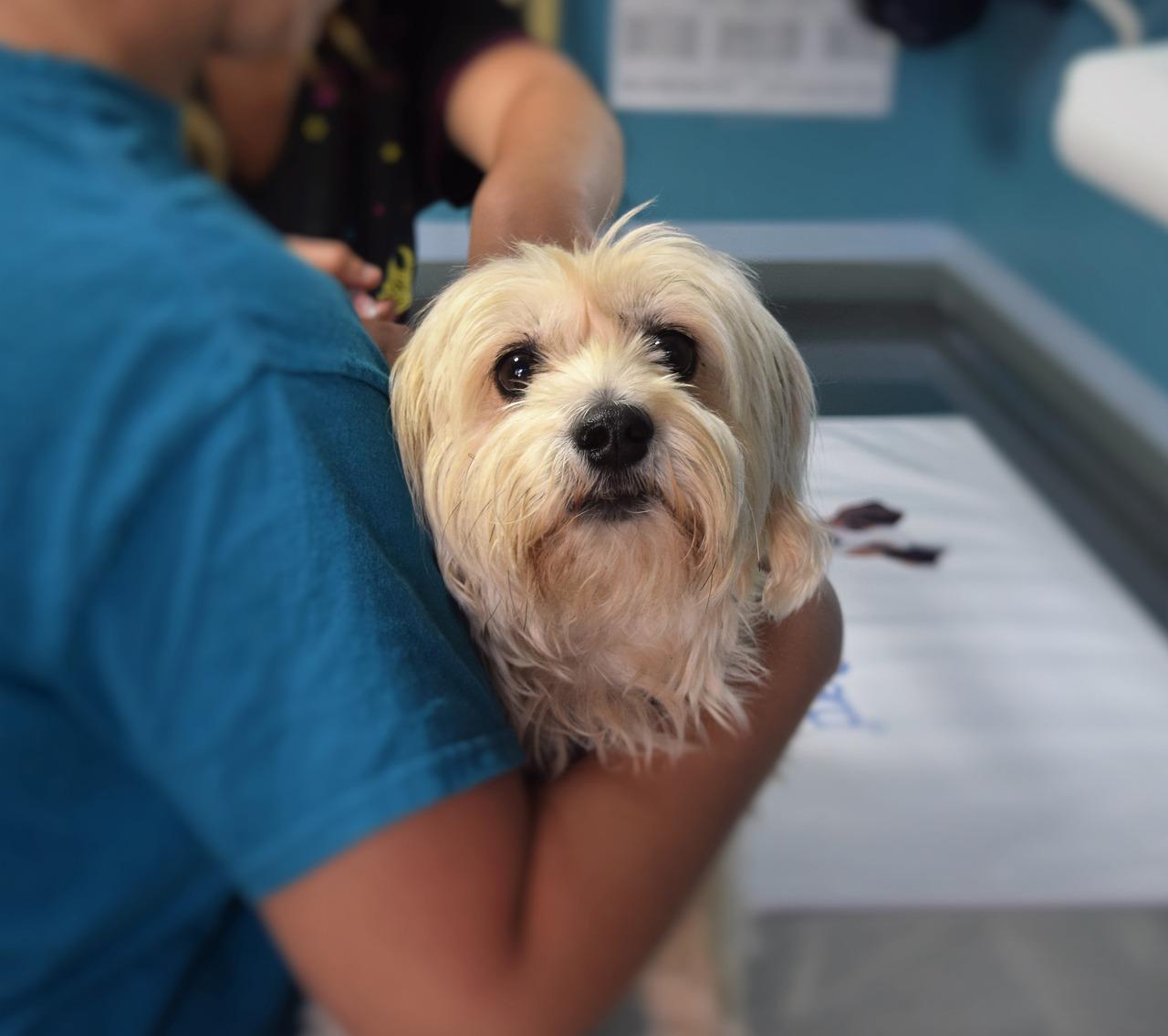 Dog Veterinary Pet - Free photo on Pixabay